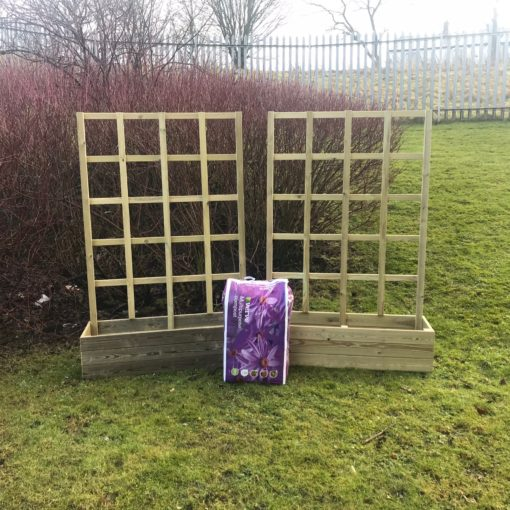 Sunflower Planter set with compost
